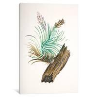 iCanvas Banks' Florilegium Series: Tillandsia sticta by Sydney Parkinson Canvas Print