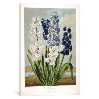 iCanvas Thornton's Temple Of Flora Series: Hyacinths by Sydenham Edwards Canvas Print