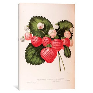 iCanvas Fruits Of America Series: Hovey's Seedling Strawberry by William Sharp Canvas Print