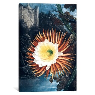iCanvas Thornton's Temple Of Flora Series: The Night-Blowing Cereus by Philip Reinagle Canvas Print