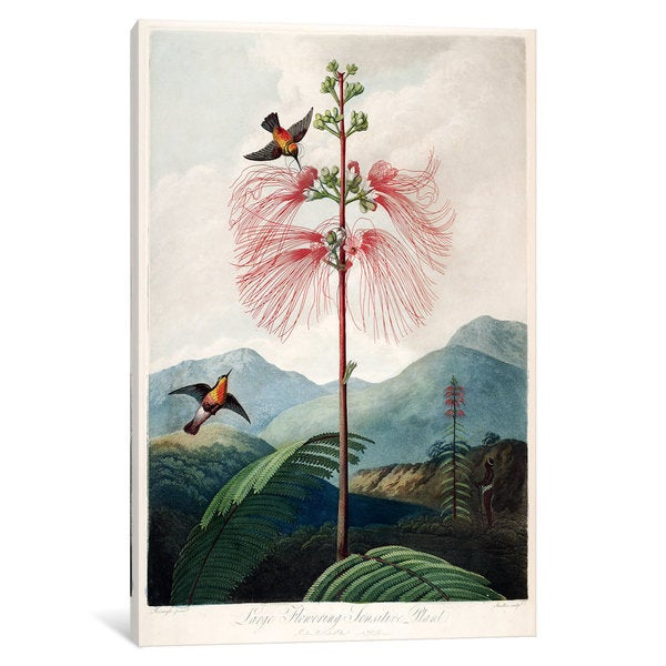 iCanvas Thornton's Temple Of Flora Series: Large Flowering Sensitive Plant by Philip Reinagle Canvas Print