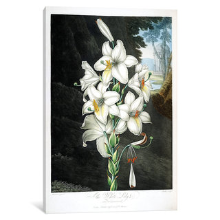 iCanvas Thornton's Temple Of Flora Series: The White Lily by Peter Charles Henderson Canvas Print