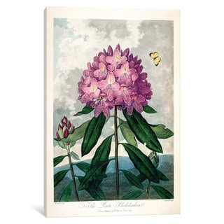 iCanvas Thornton's Temple Of Flora Series: The Pontic Rhododendron by Peter Charles Henderson Canvas Print