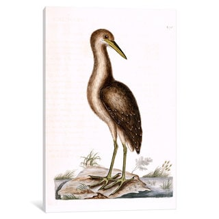 iCanvas Catesby's Natural History Series: Brown Bittern by Mark Catesby Canvas Print