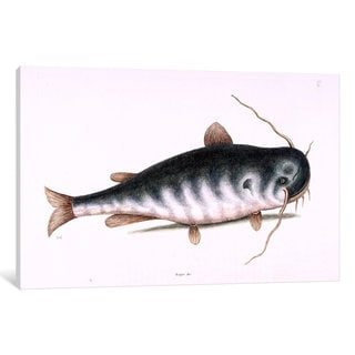 iCanvas Catesby's Natural History Series: Cat Fish by Mark Catesby Canvas Print