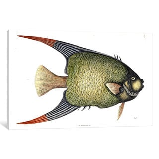 iCanvas Catesby's Natural History Series: Angel Fish by Mark Catesby Canvas Print