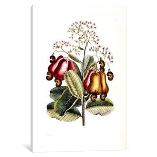 iCanvas Catesby's Natural History Series: Cashew Tree by Mark Catesby Canvas Print