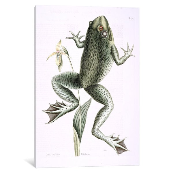 iCanvas Catesby's Natural History Series: Bull Frog & Lady's Slipper Of Pennsylvania by Mark Catesby Canvas Print