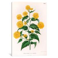 iCanvas Witte's Dutch Garden Flora Series: Kerria Japonica (Pleniflora) by Abraham Jacobus Wendel Canvas Print