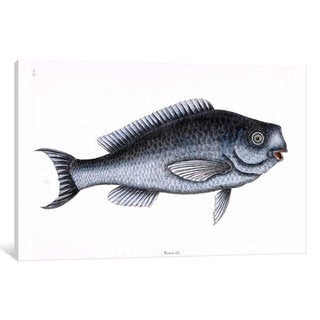 iCanvas Catesby's Natural History Series: Blue Fish by Mark Catesby Canvas Print