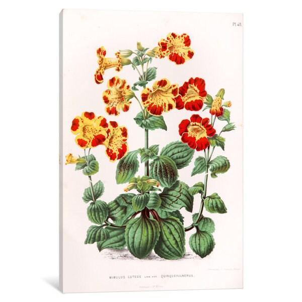 iCanvas Witte's Dutch Garden Flora Series: Mimulus Luteus (Monkey Musk) by Abraham Jacobus Wendel Canvas Print