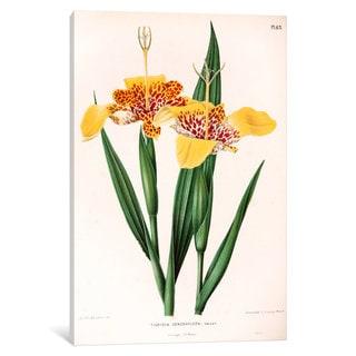 iCanvas Witte's Dutch Garden Flora Series: Tigridia Conchiiflora (Tiger Flower) by Abraham Jacobus Wendel Canvas Print