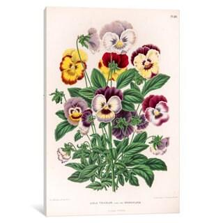 iCanvas Witte's Dutch Garden Flora Series: Viola Tricolor (Love-In-Idleness) by Abraham Jacobus Wendel Canvas Print