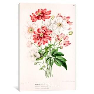iCanvas Witte's Dutch Garden Flora Series: Anemone Japonica by Abraham Jacobus Wendel Canvas Print