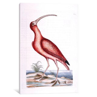 iCanvas Catesby's Natural History Series: Red Curlew by Mark Catesby Canvas Print