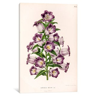 iCanvas Witte's Dutch Garden Flora Series: Campanula Medium (Canterbury Bells) by Abraham Jacobus Wendel Canvas Print