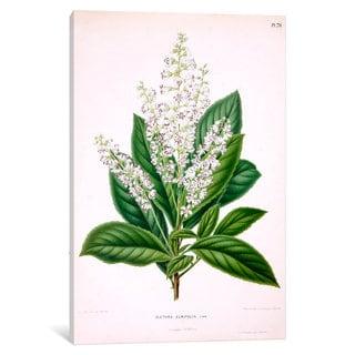 iCanvas Witte's Dutch Garden Flora Series: Clethra Alnifolia (Coastal Sweetpepperbush) by Abraham Jacobus Wendel Canvas Print