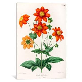 iCanvas Witte's Dutch Garden Flora Series: Dahlia Variabilis by Abraham Jacobus Wendel Canvas Print