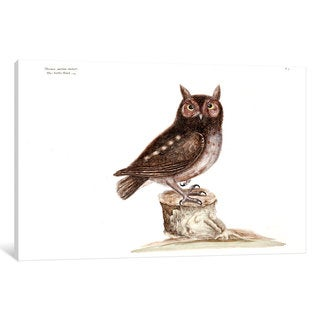 iCanvas Catesby's Natural History Series: Little Owl by Mark Catesby Canvas Print