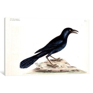 iCanvas Catesby's Natural History Series: Purple Jackdaw by Mark Catesby Canvas Print