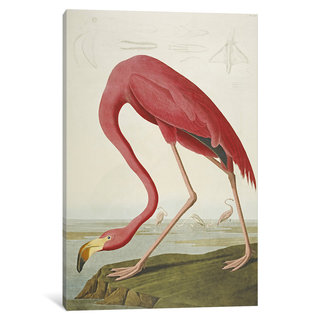 iCanvas American Flamingo, from 'The Birds of America'  by John James Audubon Canvas Print
