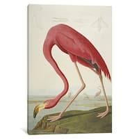 iCanvas American Flamingo, from 'The Birds of America'  by John James Audubon Canvas Print
