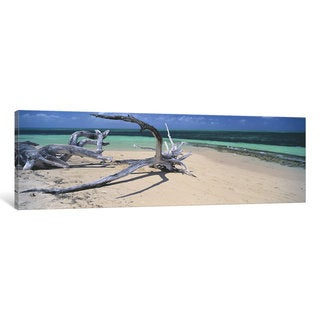 iCanvas 'Driftwood on the beach, Green Island, Great Barrier Reef, Queensland, Australia' by Panoramic Images Canvas Print