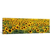 iCanvas 'Sunflowers (Helianthus annuus) in a field, Bouches-Du-Rhone, Provence, France' by Panoramic Images Canvas Print