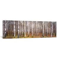 iCanvas Silver birch trees in a forestNarke, Sweden by Panoramic Images Canvas Print
