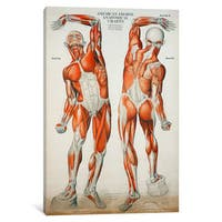 iCanvas 'American Frohse Anatomical Wallcharts, Plate #2' by Print Collection Canvas Print