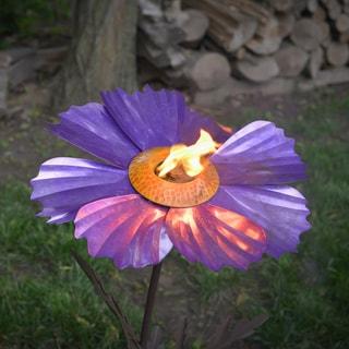 Cosmos Purple Garden Torch
