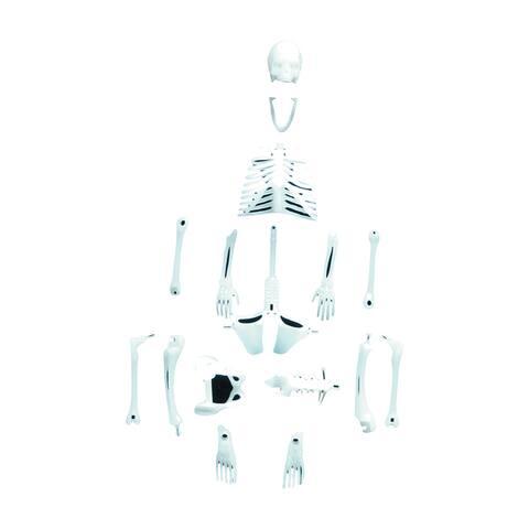 Glowing Human Skeleton - White
