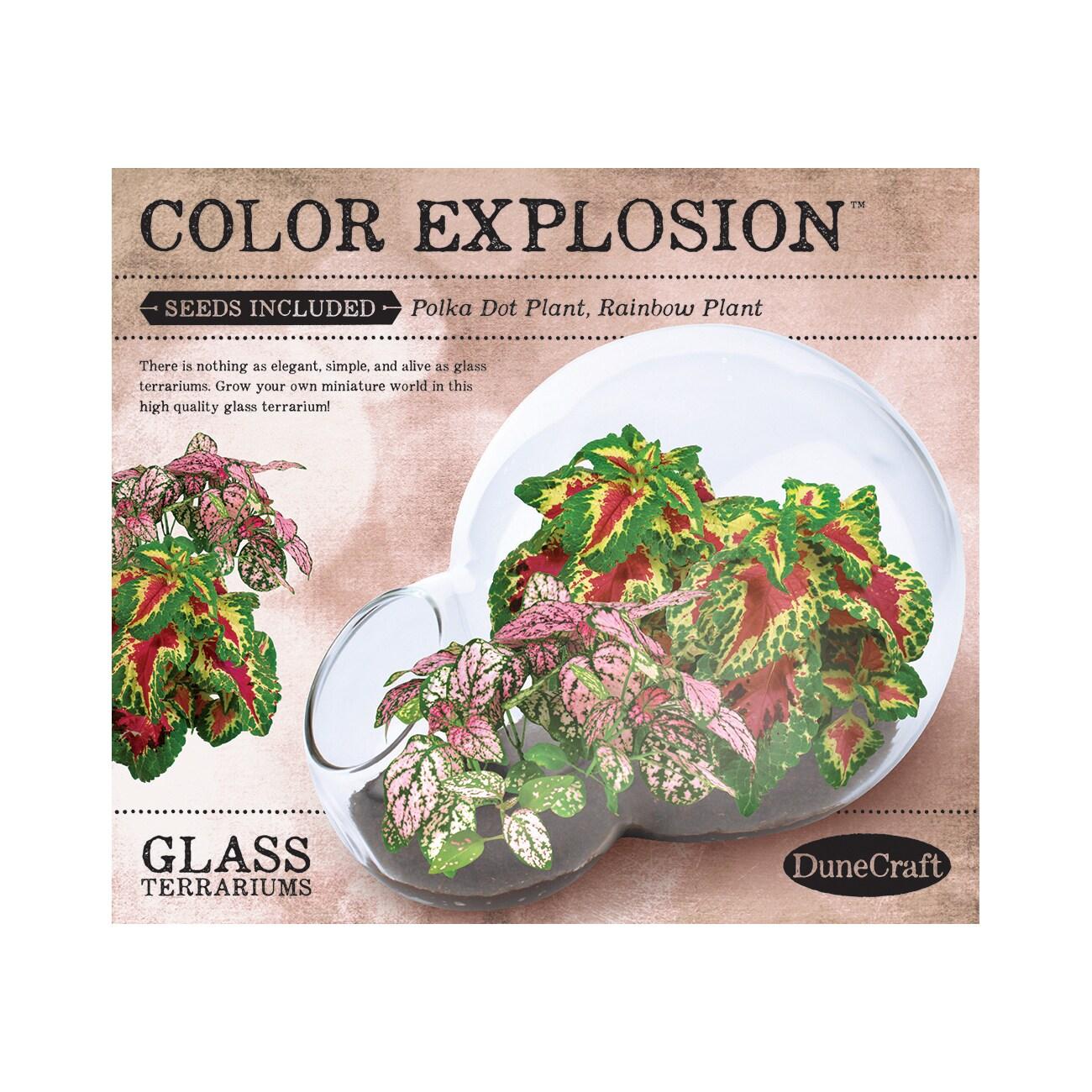 Dunecraft Double Bubble Glass Terrarium - Color Explosion...