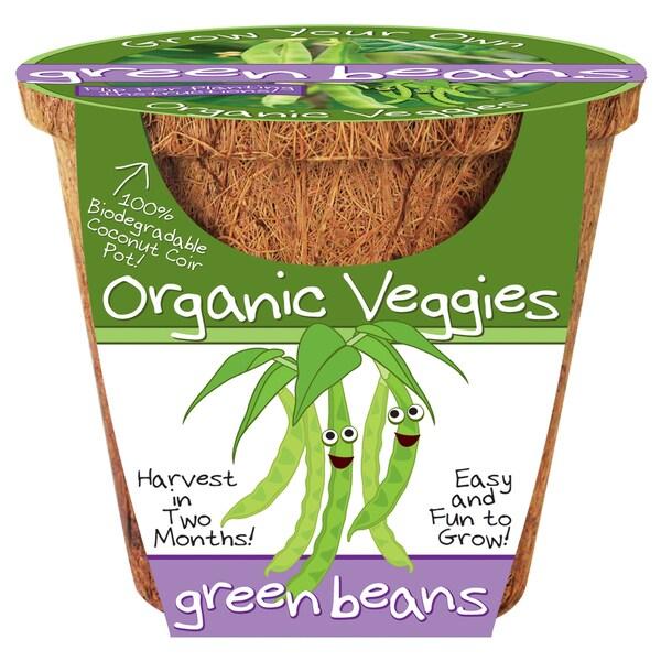 Organic Veggies - Green Beans