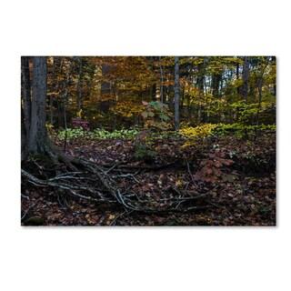 Kurt Shaffer 'November Along the Stream Bank' Canvas Art