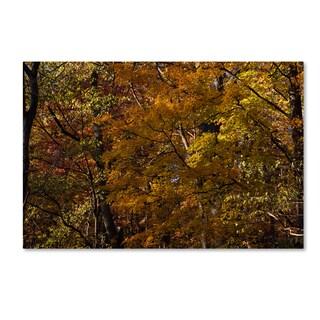 Kurt Shaffer 'Autumn Forest Study' Canvas Art