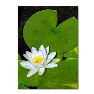 Kurt Shaffer 'White Lotus' Canvas Art