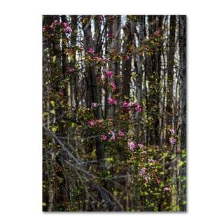 Kurt Shaffer 'Springtime in the Forest' Canvas Art