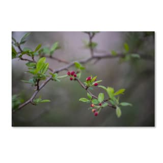 Kurt Shaffer 'Blooming in the Forest' Canvas Art