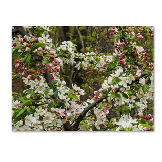 Kurt Shaffer 'Apple blossoms II' Canvas Art