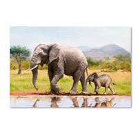 The Macneil Studio 'Elephant' Canvas Art