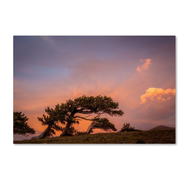 Dan Ballard 'Peaceful Tree' Canvas Art