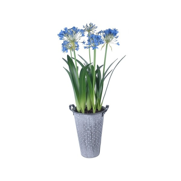 Shop gold eagle potted agapanthus silk flowers free shipping today gold eagle potted agapanthus silk flowers mightylinksfo