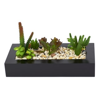 Red Vanilla Cactus Mixed Dish Garden with Wood Container