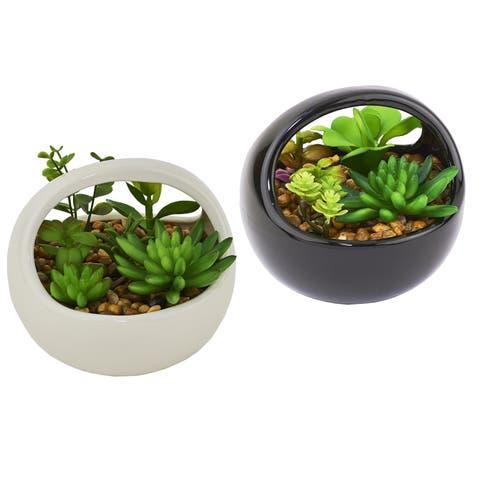 Cactus Dish Garden in White/black Ceramic Container
