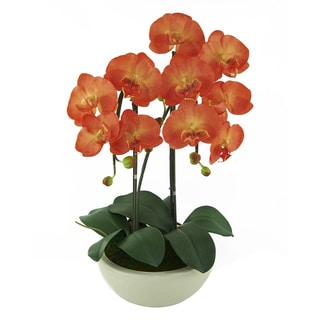 Red Vanilla Orange Phalaenopsis Centerpiece in White Base - N/A