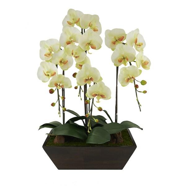 Red Vanilla Cream/Green Phalaenopsis Centerpiece - N/A
