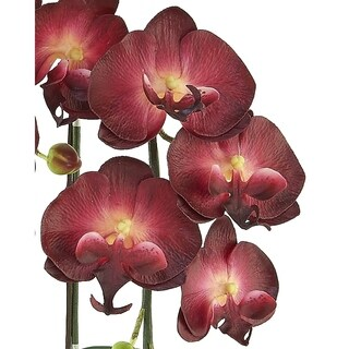 Red Vanilla Burgundy Phalaenopsis with Black Base Floral Centerpiece