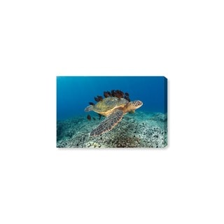 Oliver Gal 'Sea Turtle and Fish by David Fleetham' Nautical and Coastal Wall Art Canvas Print - Blue, Green