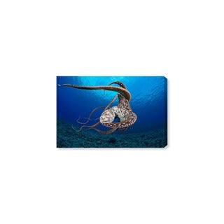 Oliver Gal 'Day Octopus Hawaii by David Fleetham' Canvas Art